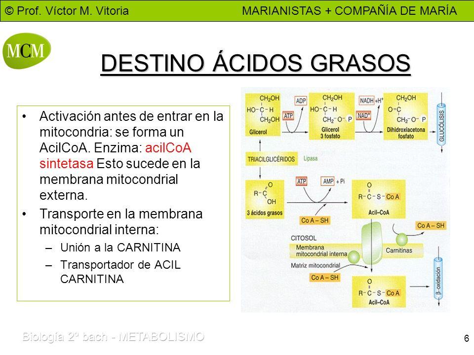 DESTINO ÁCIDOS GRASOS