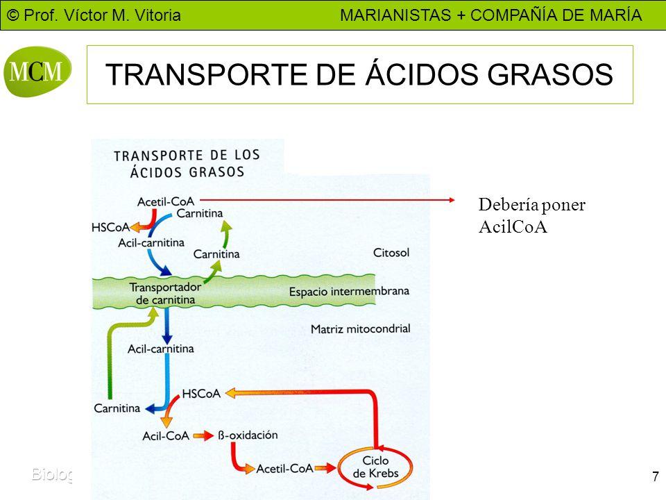 TRANSPORTE DE ÁCIDOS GRASOS