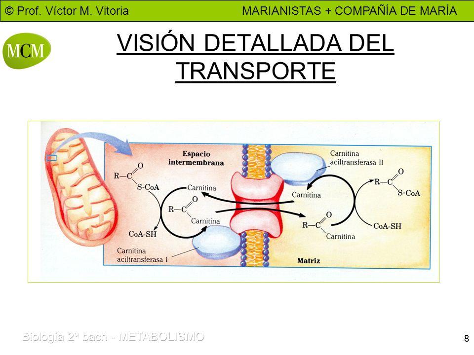 VISIÓN DETALLADA DEL TRANSPORTE