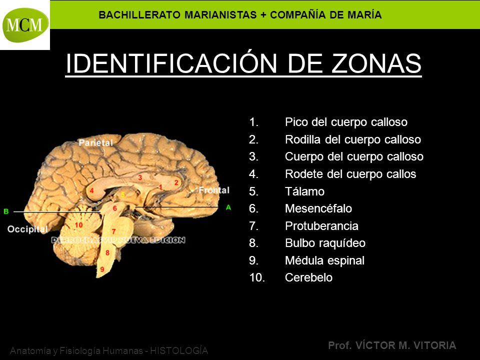 IDENTIFICACIÓN DE ZONAS