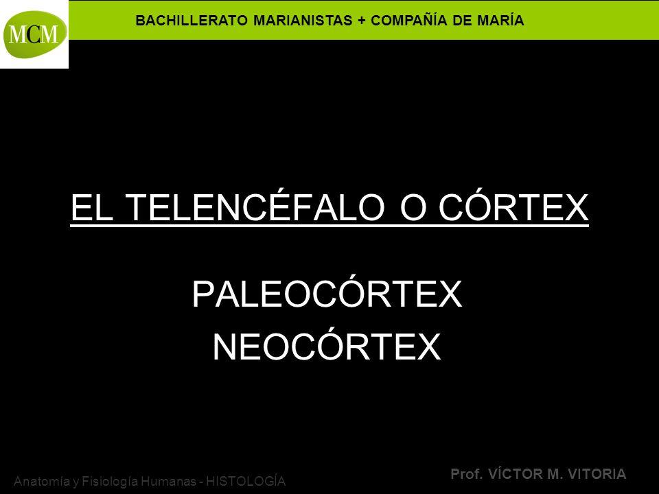 EL TELENCÉFALO O CÓRTEX