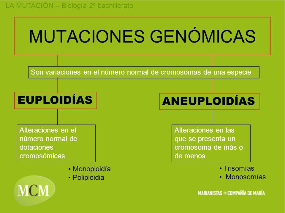 MUTACIONES GENÓMICAS EUPLOIDÍAS ANEUPLOIDÍAS