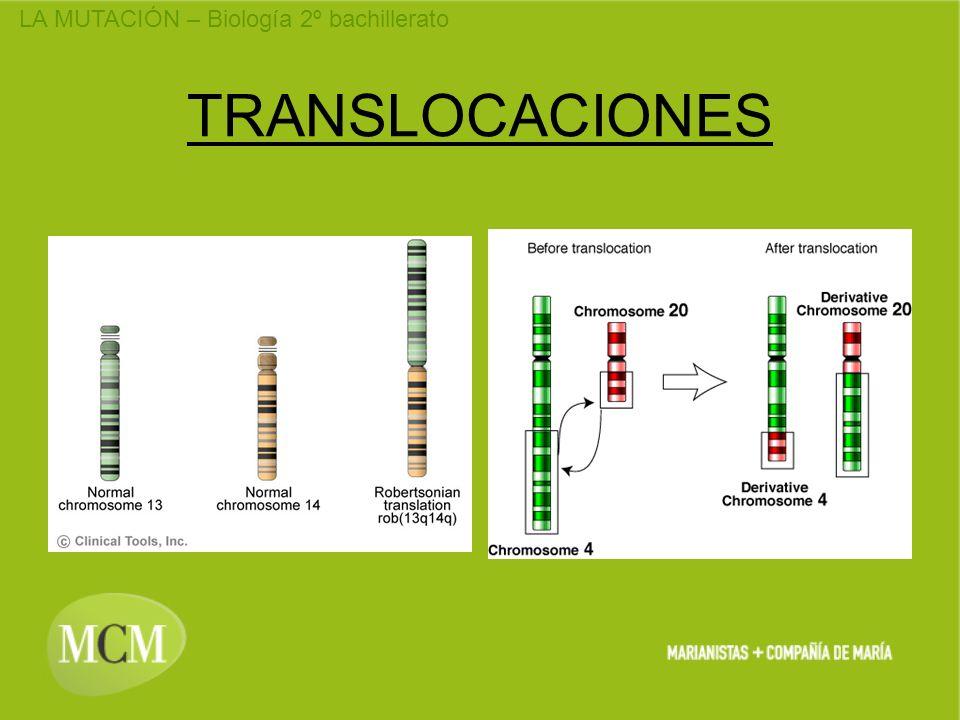 TRANSLOCACIONES