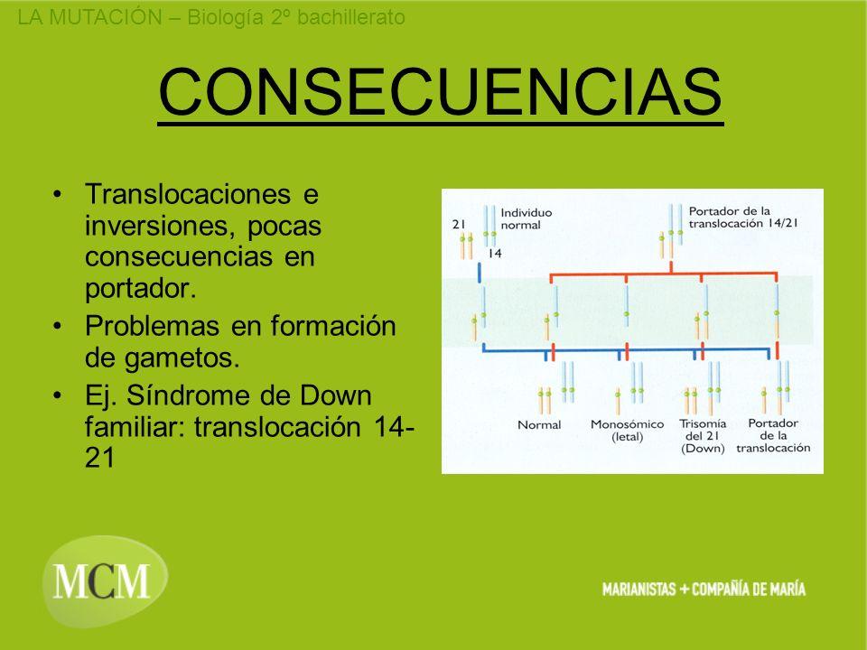 CONSECUENCIAS Translocaciones e inversiones, pocas consecuencias en portador. Problemas en formación de gametos.