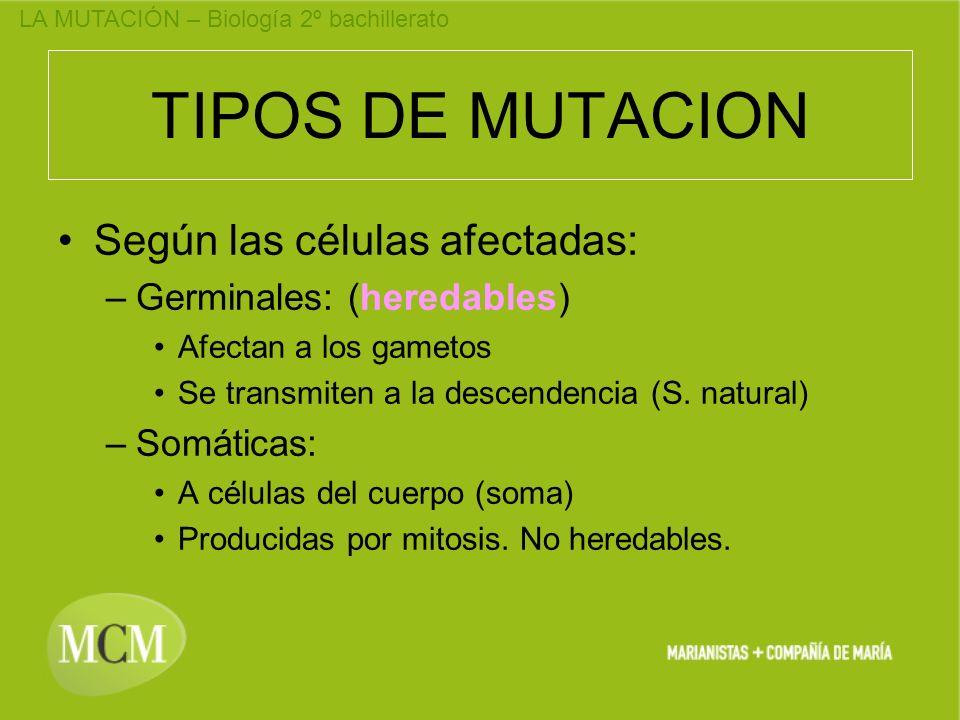 TIPOS DE MUTACION Según las células afectadas: