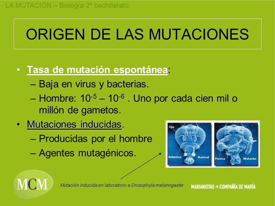 ORIGEN DE LAS MUTACIONES