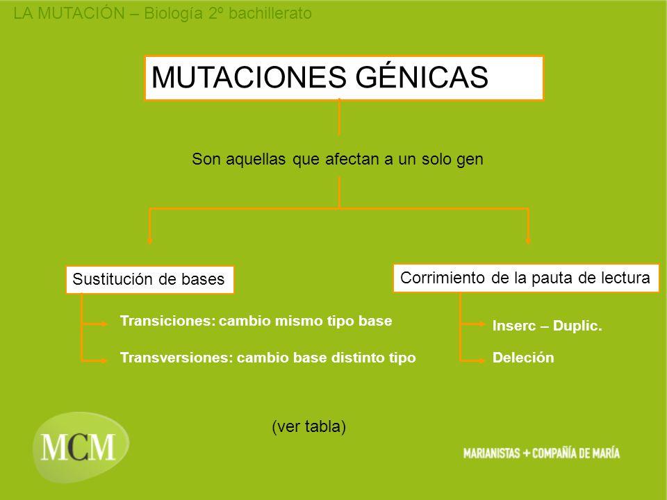MUTACIONES GÉNICAS Son aquellas que afectan a un solo gen