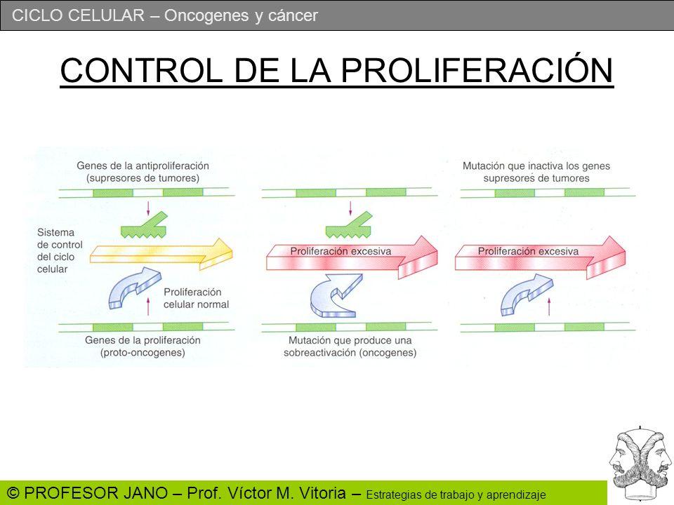 CONTROL DE LA PROLIFERACIÓN