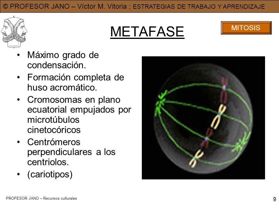 METAFASE Máximo grado de condensación.