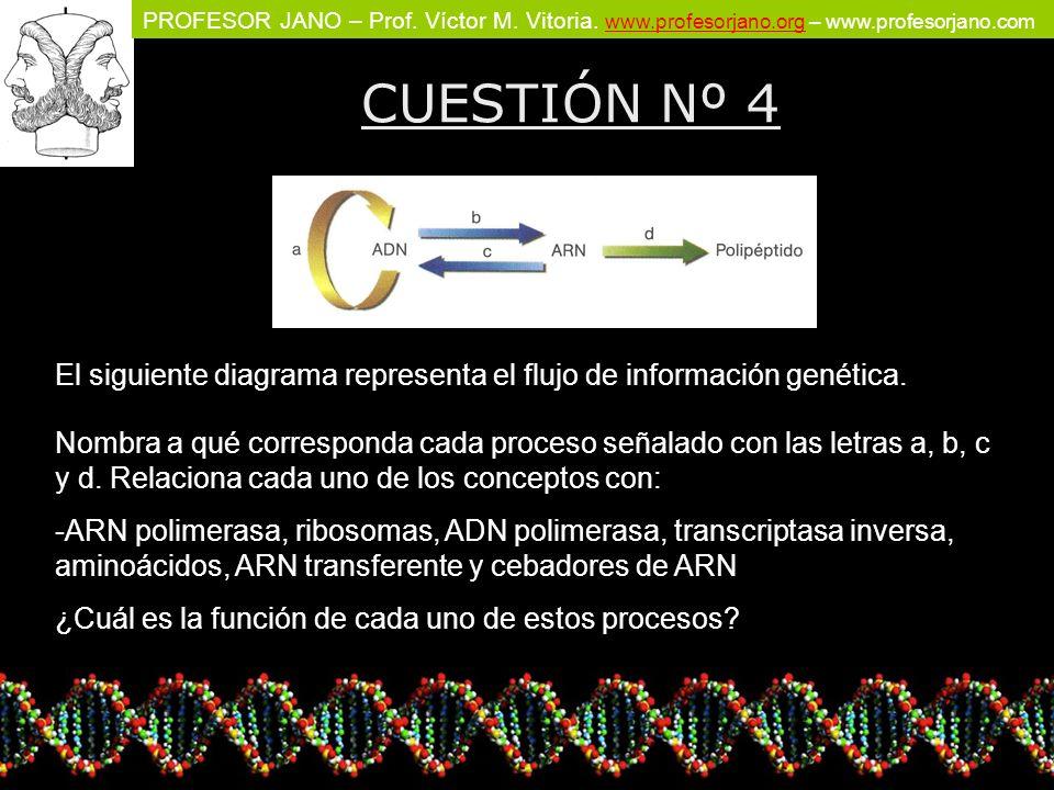 CUESTIÓN Nº 4 El siguiente diagrama representa el flujo de información genética.