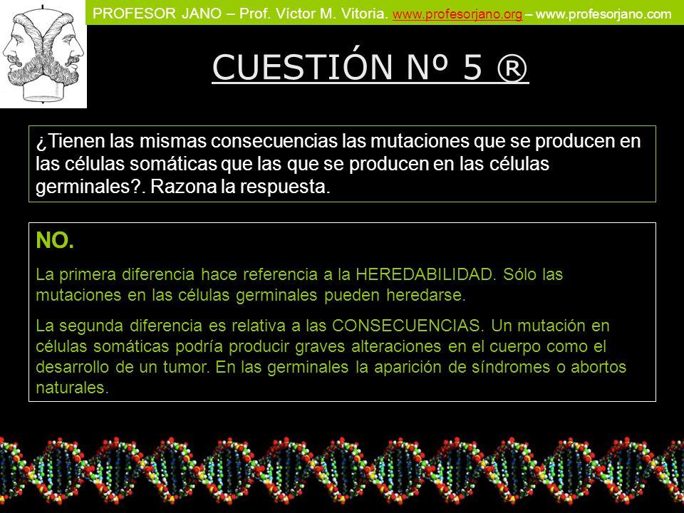 CUESTIÓN Nº 5 ®