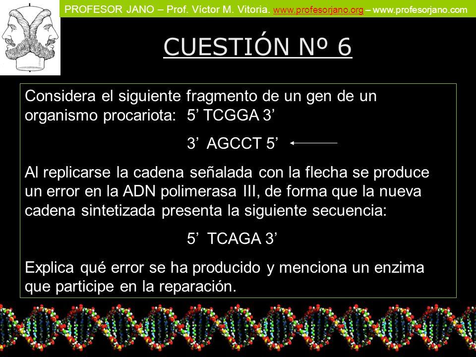 CUESTIÓN Nº 6 Considera el siguiente fragmento de un gen de un organismo procariota: 5' TCGGA 3' 3' AGCCT 5'
