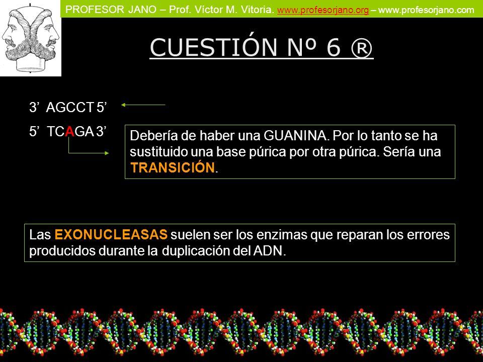 CUESTIÓN Nº 6 ® 3' AGCCT 5' 5' TCAGA 3'