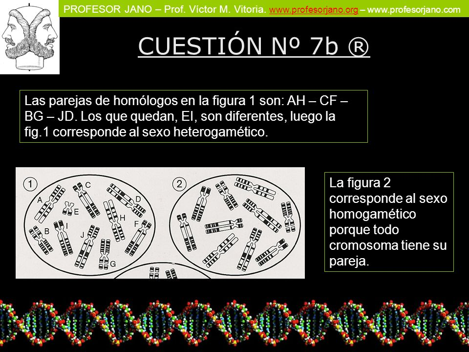 CUESTIÓN Nº 7b ®