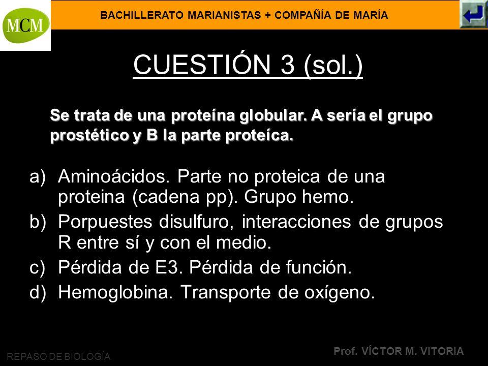 CUESTIÓN 3 (sol.) Se trata de una proteína globular. A sería el grupo prostético y B la parte proteíca.