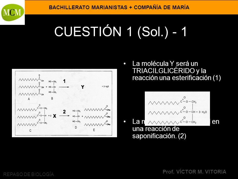 CUESTIÓN 1 (Sol.) - 1 La molécula Y será un TRIACILGLICÉRIDO y la reacción una esterificación (1)