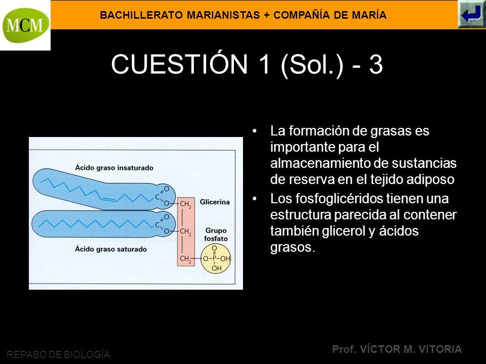 CUESTIÓN 1 (Sol.) - 3 La formación de grasas es importante para el almacenamiento de sustancias de reserva en el tejido adiposo.