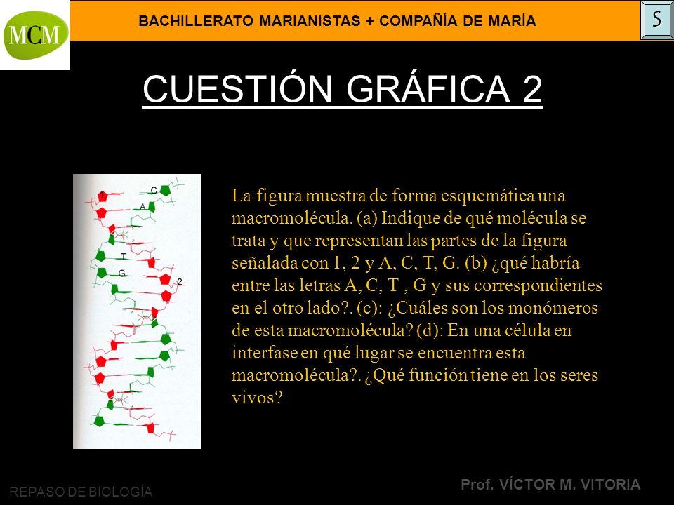 SCUESTIÓN GRÁFICA 2.