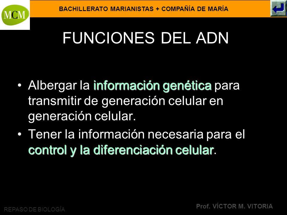 FUNCIONES DEL ADN Albergar la información genética para transmitir de generación celular en generación celular.