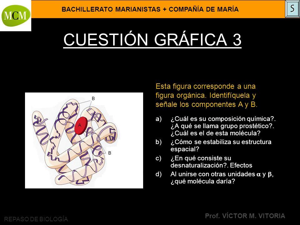 S CUESTIÓN GRÁFICA 3. Esta figura corresponde a una figura orgánica. Identifíquela y señale los componentes A y B.