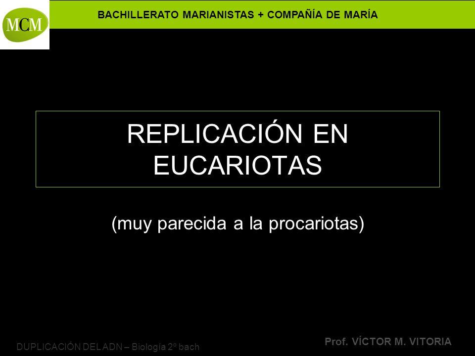 REPLICACIÓN EN EUCARIOTAS