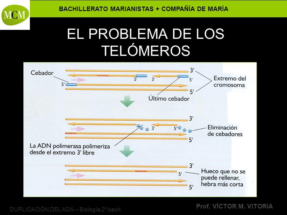 EL PROBLEMA DE LOS TELÓMEROS