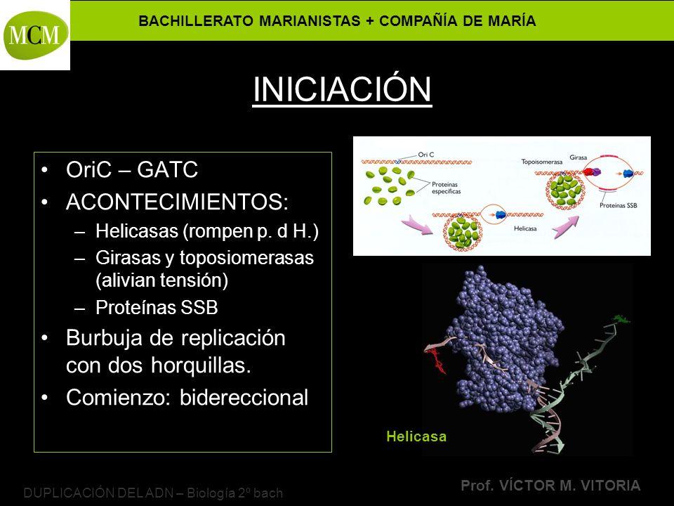 DUPLICACIÓN DEL ADN – Biología 2º bach