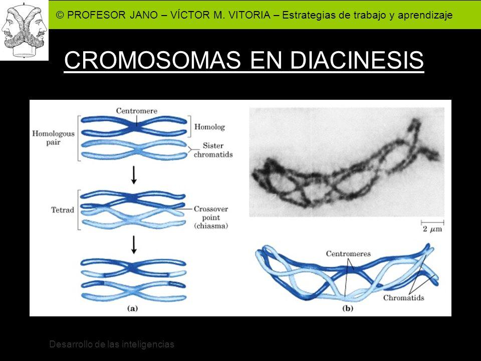 CROMOSOMAS EN DIACINESIS