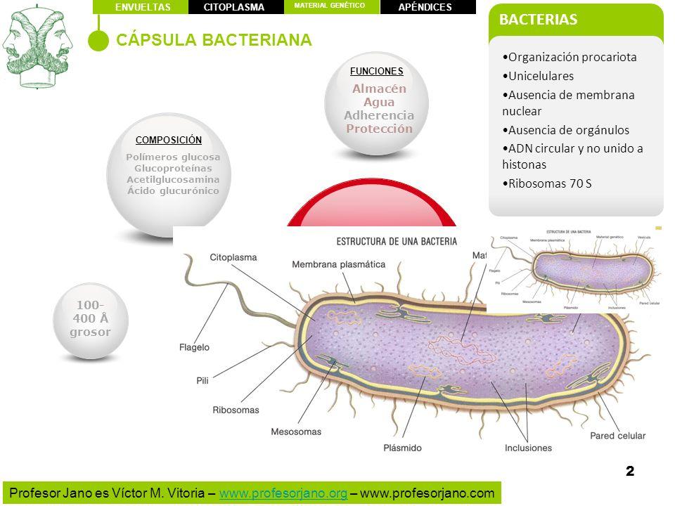 CÁPSULA (casi todos los patógenos)