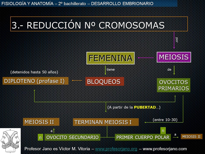 3.- REDUCCIÓN Nº CROMOSOMAS