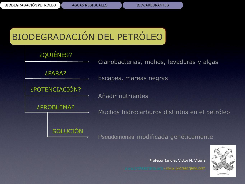 BIODEGRADACIÓN DEL PETRÓLEO