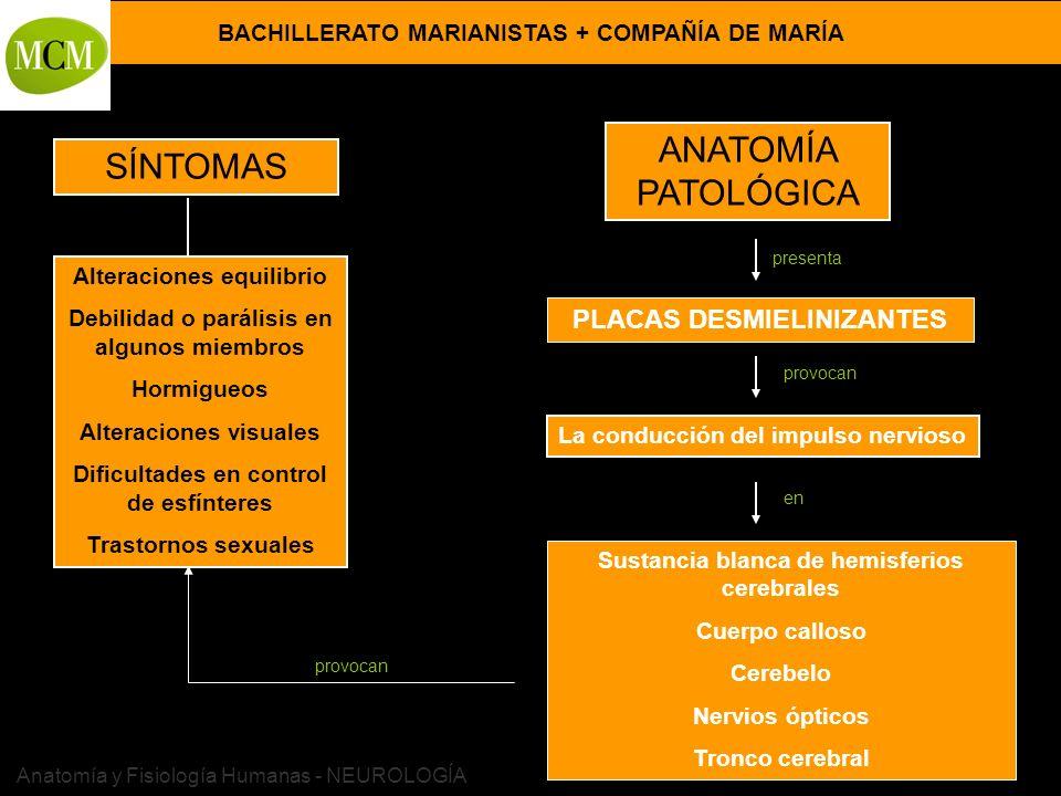 ANATOMÍA PATOLÓGICA SÍNTOMAS PLACAS DESMIELINIZANTES