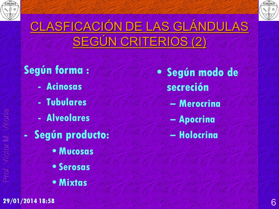 CLASFICACIÓN DE LAS GLÁNDULAS SEGÚN CRITERIOS (2)