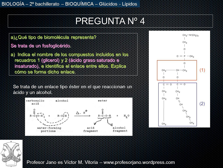 PREGUNTA Nº 4 ¿Qué tipo de biomolécula representa