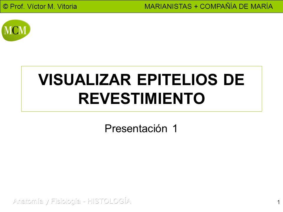 VISUALIZAR EPITELIOS DE REVESTIMIENTO