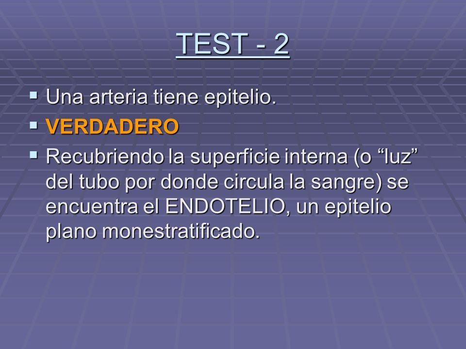 TEST - 2 Una arteria tiene epitelio. VERDADERO