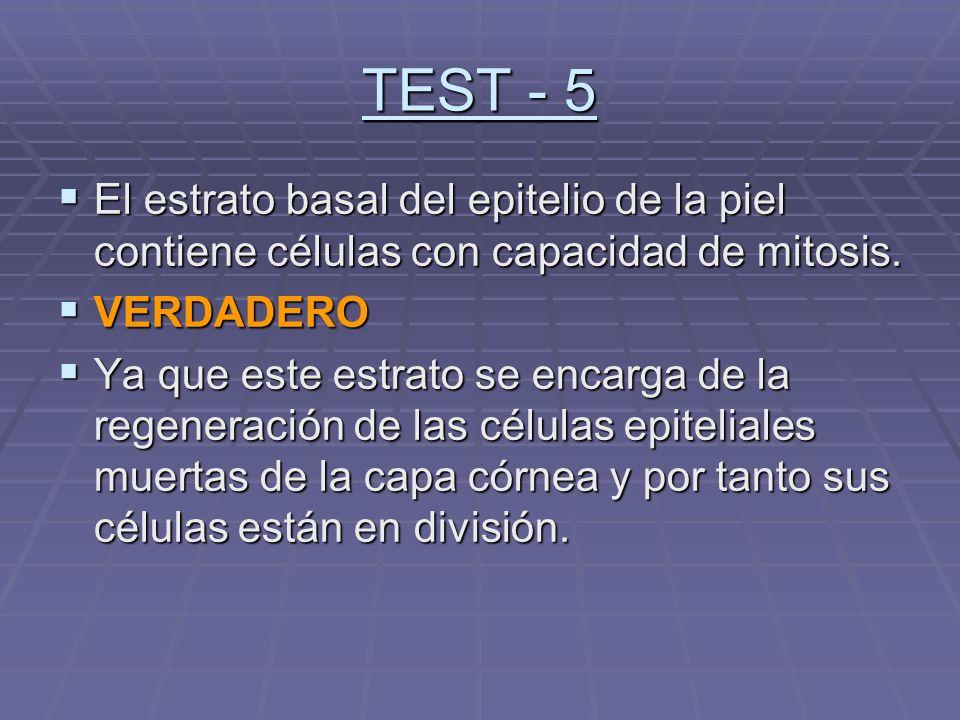 TEST - 5 El estrato basal del epitelio de la piel contiene células con capacidad de mitosis. VERDADERO.