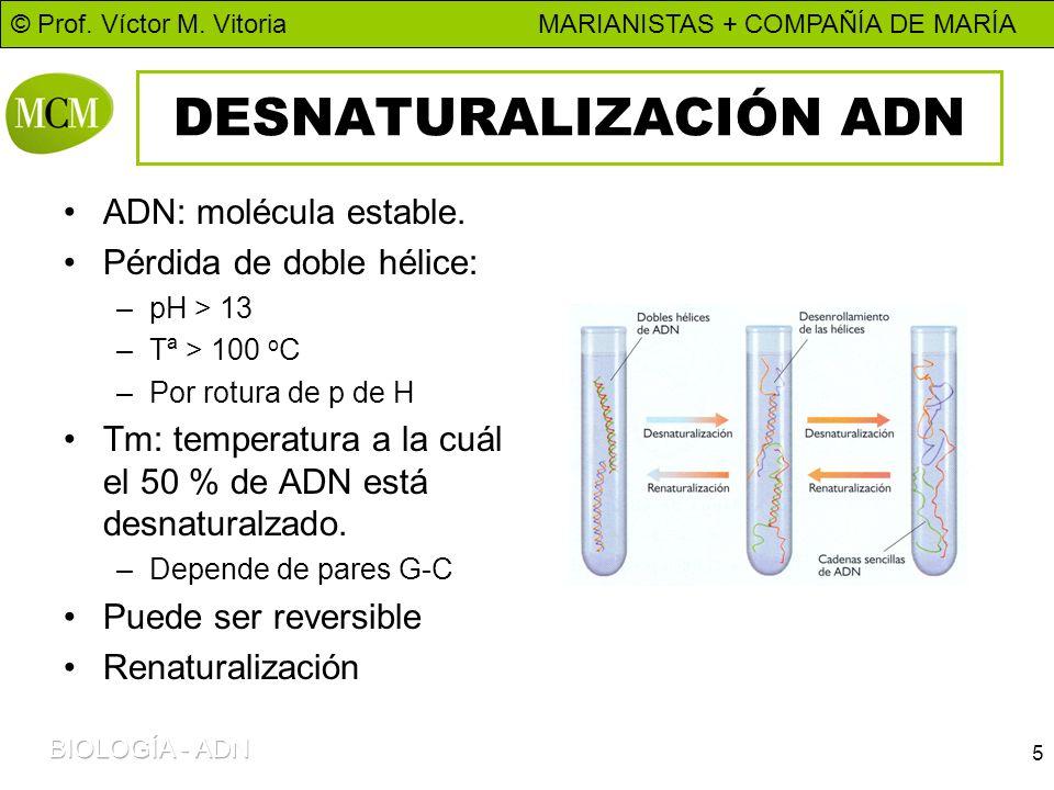 DESNATURALIZACIÓN ADN