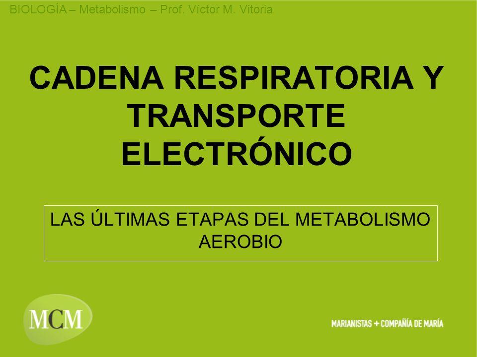 CADENA RESPIRATORIA Y TRANSPORTE ELECTRÓNICO