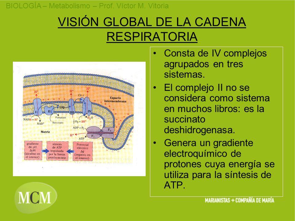 VISIÓN GLOBAL DE LA CADENA RESPIRATORIA