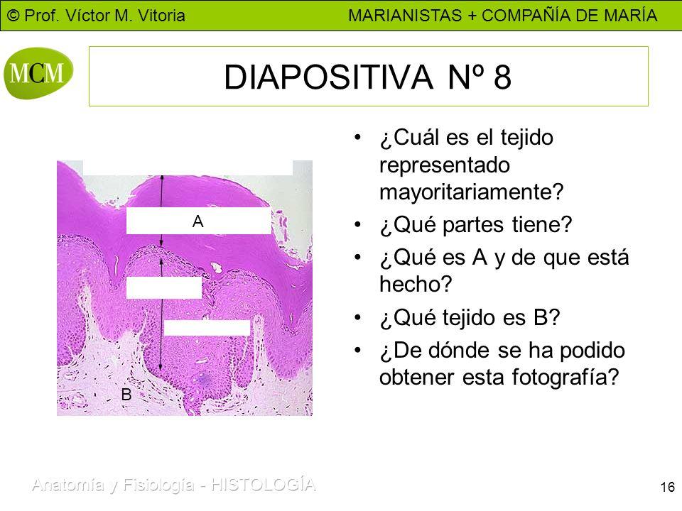 DIAPOSITIVA Nº 8 ¿Cuál es el tejido representado mayoritariamente