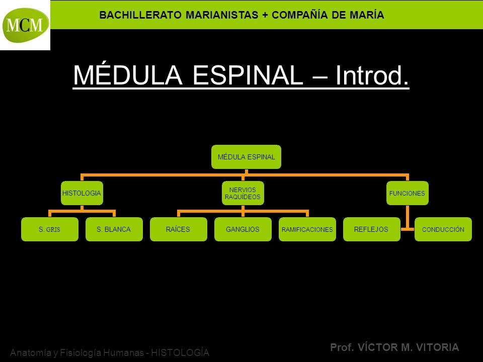 MÉDULA ESPINAL – Introd.