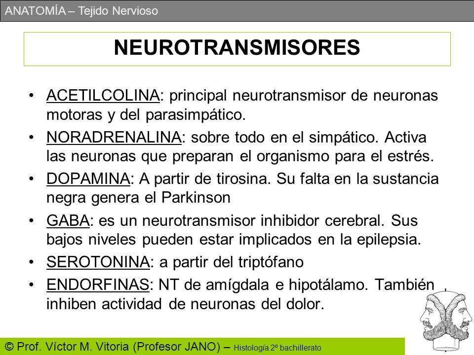 NEUROTRANSMISORESACETILCOLINA: principal neurotransmisor de neuronas motoras y del parasimpático.