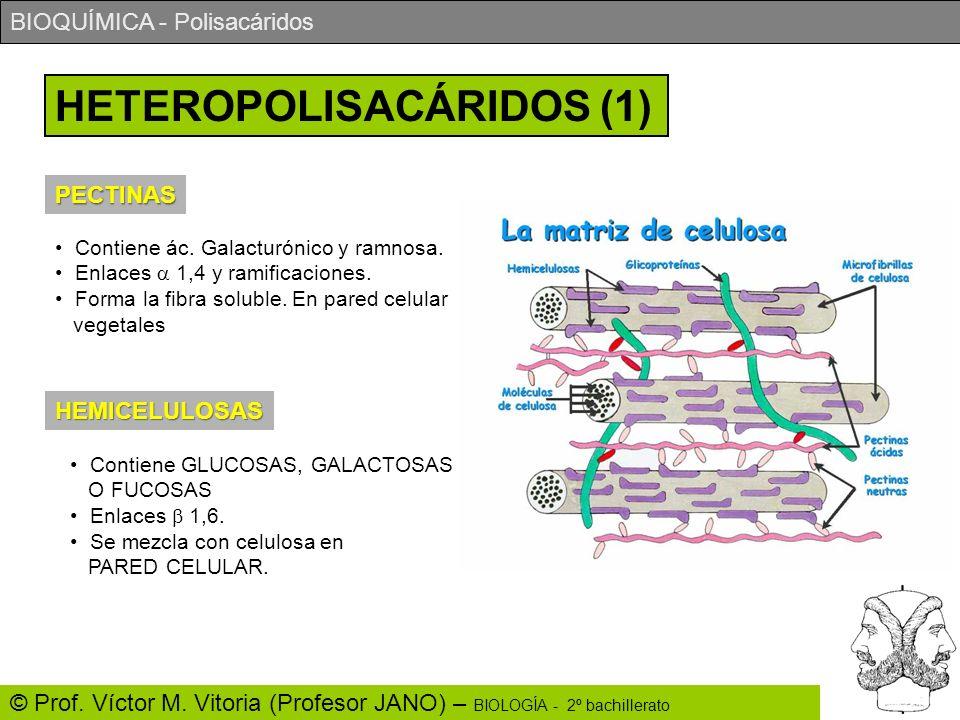 HETEROPOLISACÁRIDOS (1)