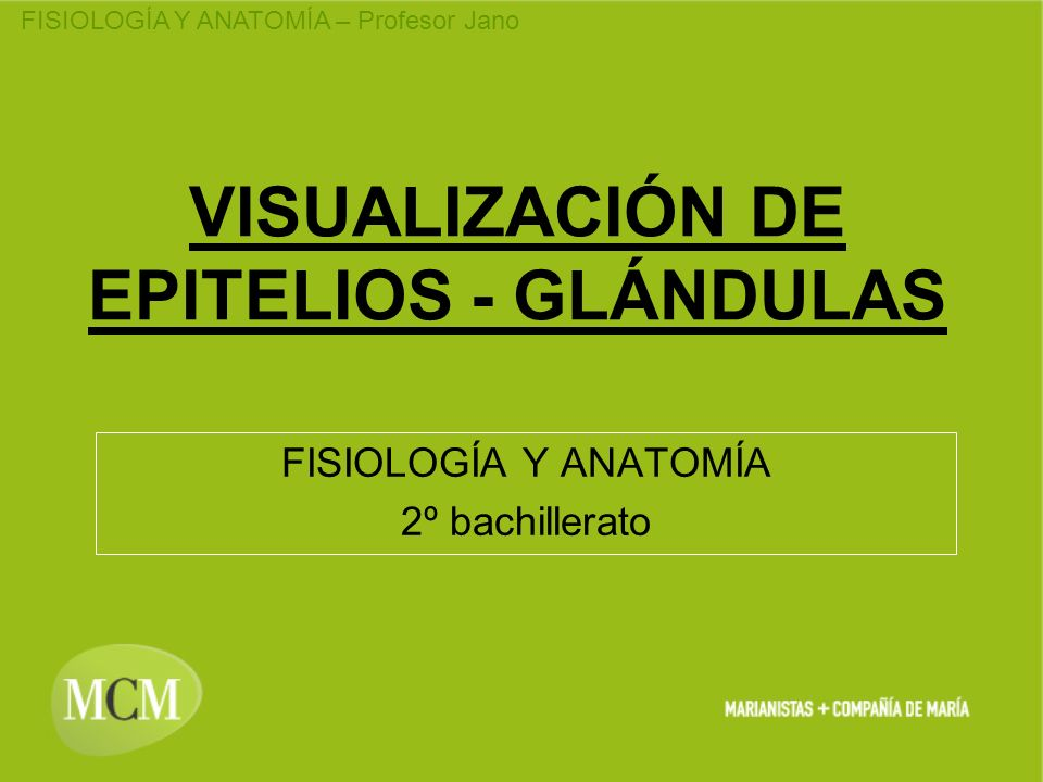 VISUALIZACIÓN DE EPITELIOS - GLÁNDULAS