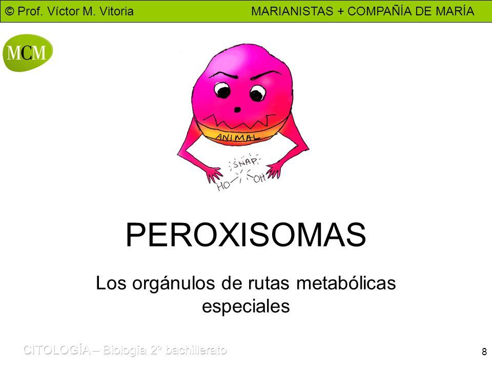Los orgánulos de rutas metabólicas especiales