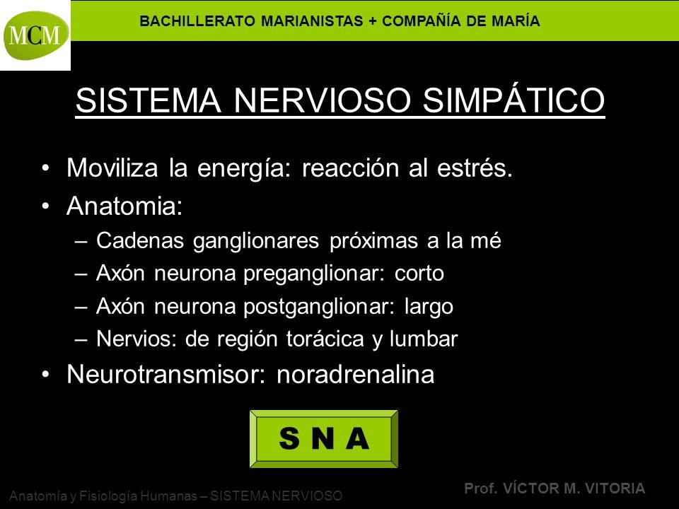 SISTEMA NERVIOSO SIMPÁTICO