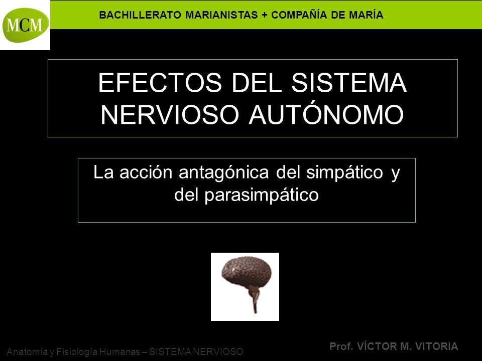 EFECTOS DEL SISTEMA NERVIOSO AUTÓNOMO