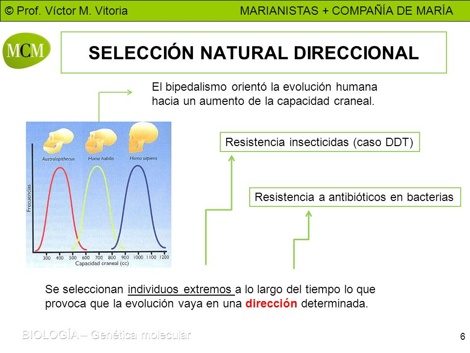 SELECCIÓN NATURAL DIRECCIONAL