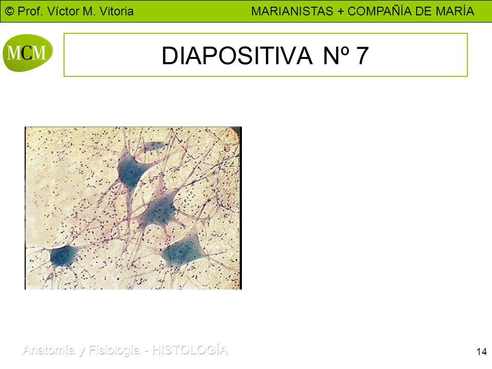 DIAPOSITIVA Nº 7